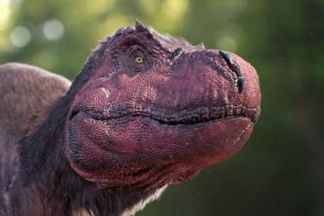 0260 rex head close up
