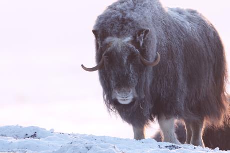 Alaska a year in the wild