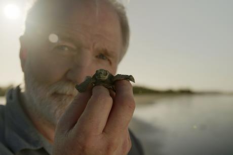 Turtles inside Nest