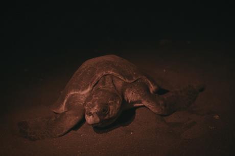 Turtles_Evening Shot of Turtle[2]