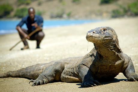 BIG_BEASTS_LAST_OF_THE_GIANTS_KOMODO DRAGON AND PATRICK ARYEE