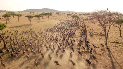 Serengeti cc