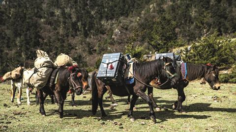 Horses transporting gear