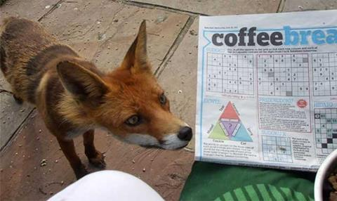 Fox Wars