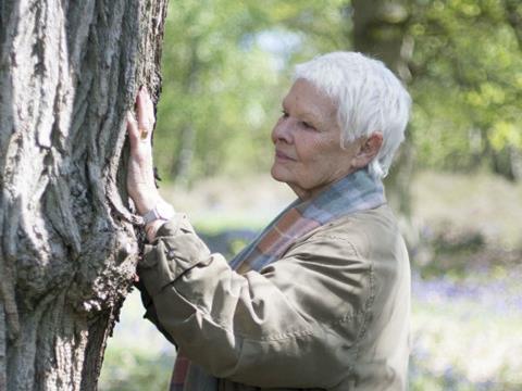 Judi dench trees