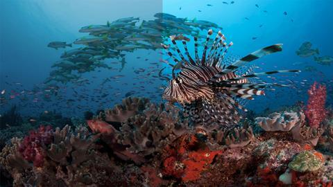 Simulated images for illustrative purposes only lionfish (petrois voiltans)
